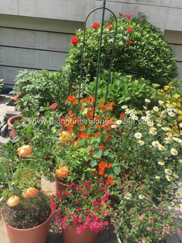 Khi già rồi, tôi sẽ tìm một mảnh vườn nhỏ, trước nhà trồng hoa, sau nhà trồng rau, một bữa trà một bữa cơm, cùng một người san sẻ 2