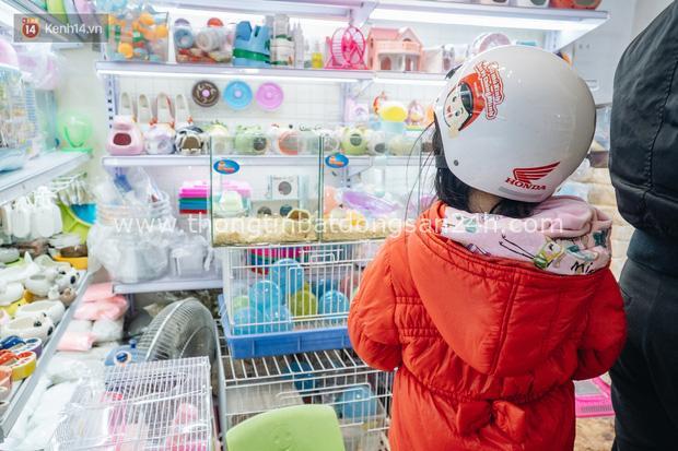 Năm Canh Tý, người trẻ tìm mua chuột hamster để giảm stress và cầu chúc may mắn - Ảnh 16.