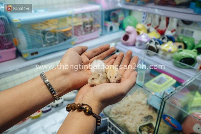 Năm Canh Tý, người trẻ tìm mua chuột hamster để giảm stress và cầu chúc may mắn - Ảnh 19.