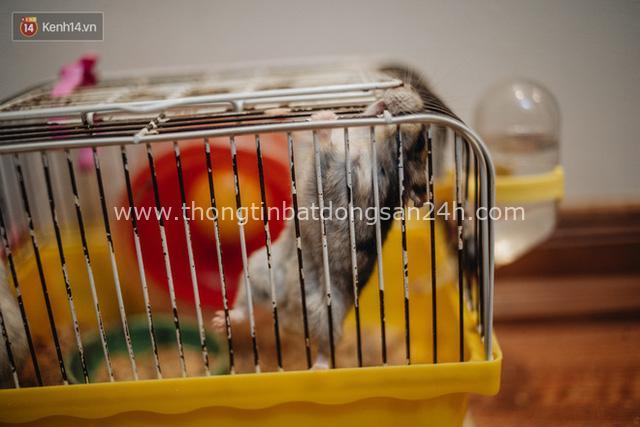 Năm Canh Tý, người trẻ tìm mua chuột hamster để giảm stress và cầu chúc may mắn - Ảnh 20.