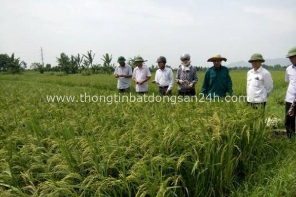 Thanh Hóa được chuyển đổi mục đích sử dụng gần 96 ha đất 6