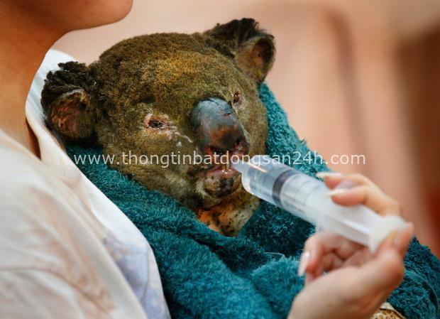Thương quá tự nhiên ơi: Hình ảnh xót xa cho thấy đại thảm họa cháy rừng tại Úc đang khiến các loài vật bị giày vò kinh khủng đến mức nào - Ảnh 4.