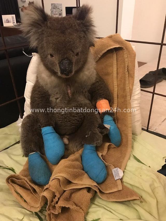 Thương quá tự nhiên ơi: Hình ảnh xót xa cho thấy đại thảm họa cháy rừng tại Úc đang khiến các loài vật bị giày vò kinh khủng đến mức nào - Ảnh 6.