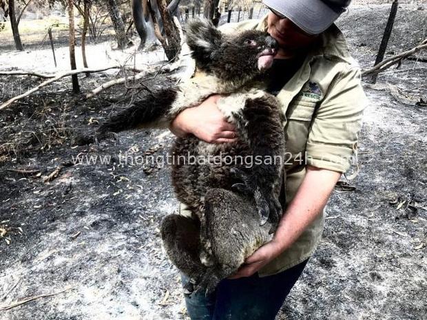Thương quá tự nhiên ơi: Hình ảnh xót xa cho thấy đại thảm họa cháy rừng tại Úc đang khiến các loài vật bị giày vò kinh khủng đến mức nào - Ảnh 10.