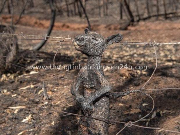 Thương quá tự nhiên ơi: Hình ảnh xót xa cho thấy đại thảm họa cháy rừng tại Úc đang khiến các loài vật bị giày vò kinh khủng đến mức nào - Ảnh 13.