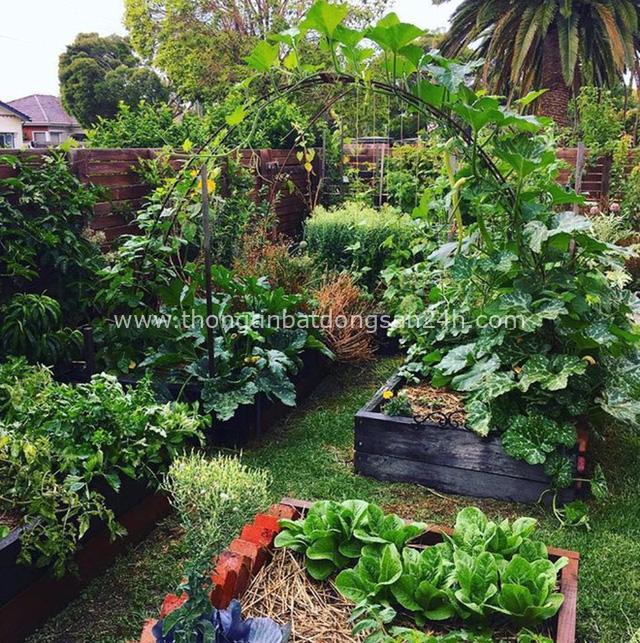 Khu vườn mùa xuân đẹp như tranh vẽ với đủ loại trái cây và rau củ của đôi vợ chồng đam mê trồng trọt - Ảnh 8.