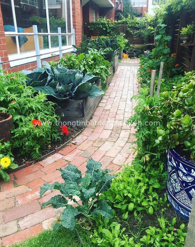 Khu vườn mùa xuân đẹp như tranh vẽ với đủ loại trái cây và rau củ của đôi vợ chồng đam mê trồng trọt - Ảnh 11.