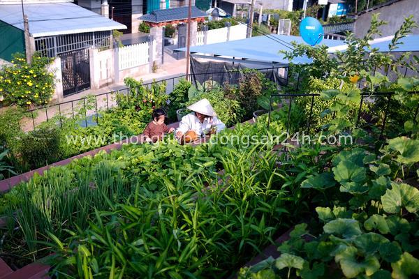 'Vườn rau bậc thang' xanh mướt trên mái nhà ở Quảng Ngãi 18