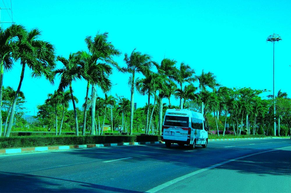 Những hàng cau xanh mướt cửa ngõ thành phố Bà Rịa