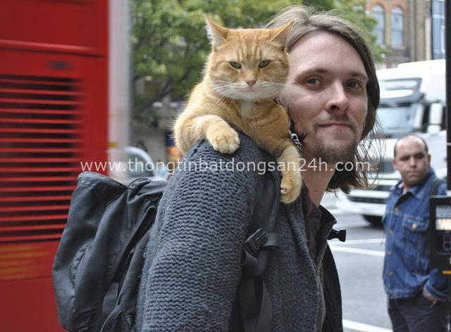 Cứu 1 con mèo hoang, người đàn ông bất ngờ đổi đời theo cách không ai nghĩ đến - Ảnh 1.