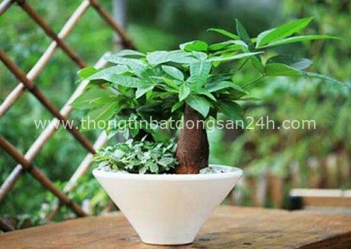 4 giống cây sức khỏe trồng trong nhà, văn phòng: Đẹp nhà, dưỡng sinh, bình an, hạnh phúc - Ảnh 1.