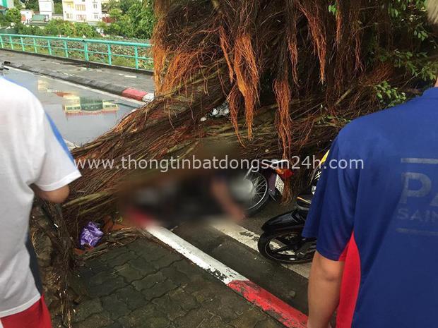 Cây xanh liên tục ngã đổ gây thương vong, chuyên gia nói nên khai tử những gốc cây tử thần - Ảnh 3.