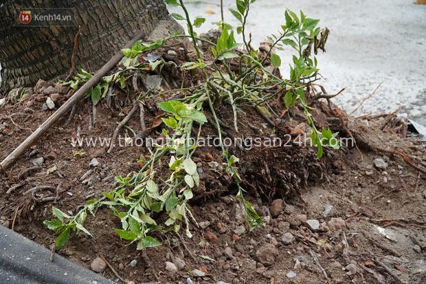 Cây xanh liên tục ngã đổ gây thương vong, chuyên gia nói nên khai tử những gốc cây tử thần - Ảnh 4.