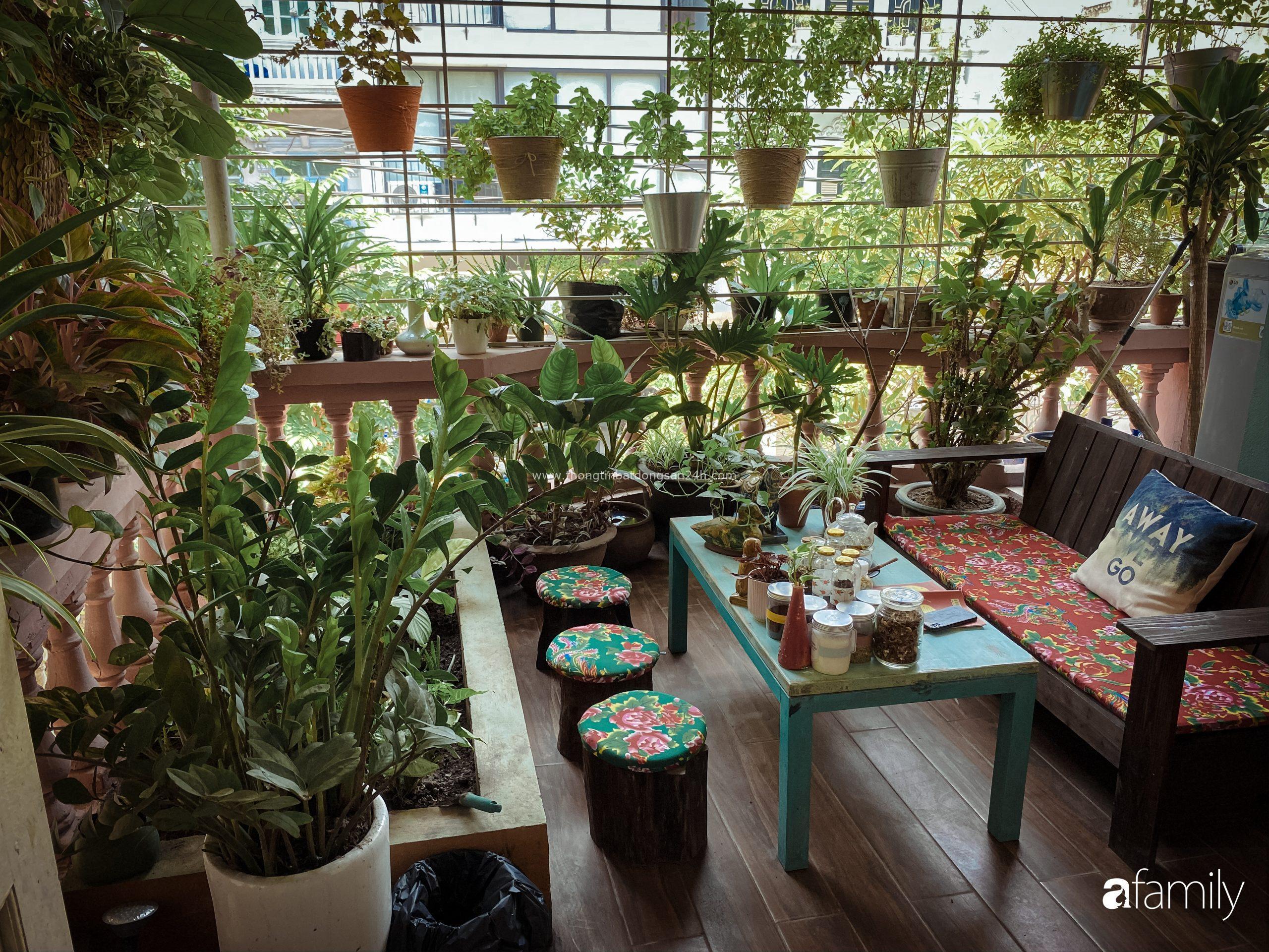 """Chàng trai Hà Nội chia sẻ bí quyết trồng cả """"rừng cây"""" tươi tốt xanh mát trong nhà 1"""
