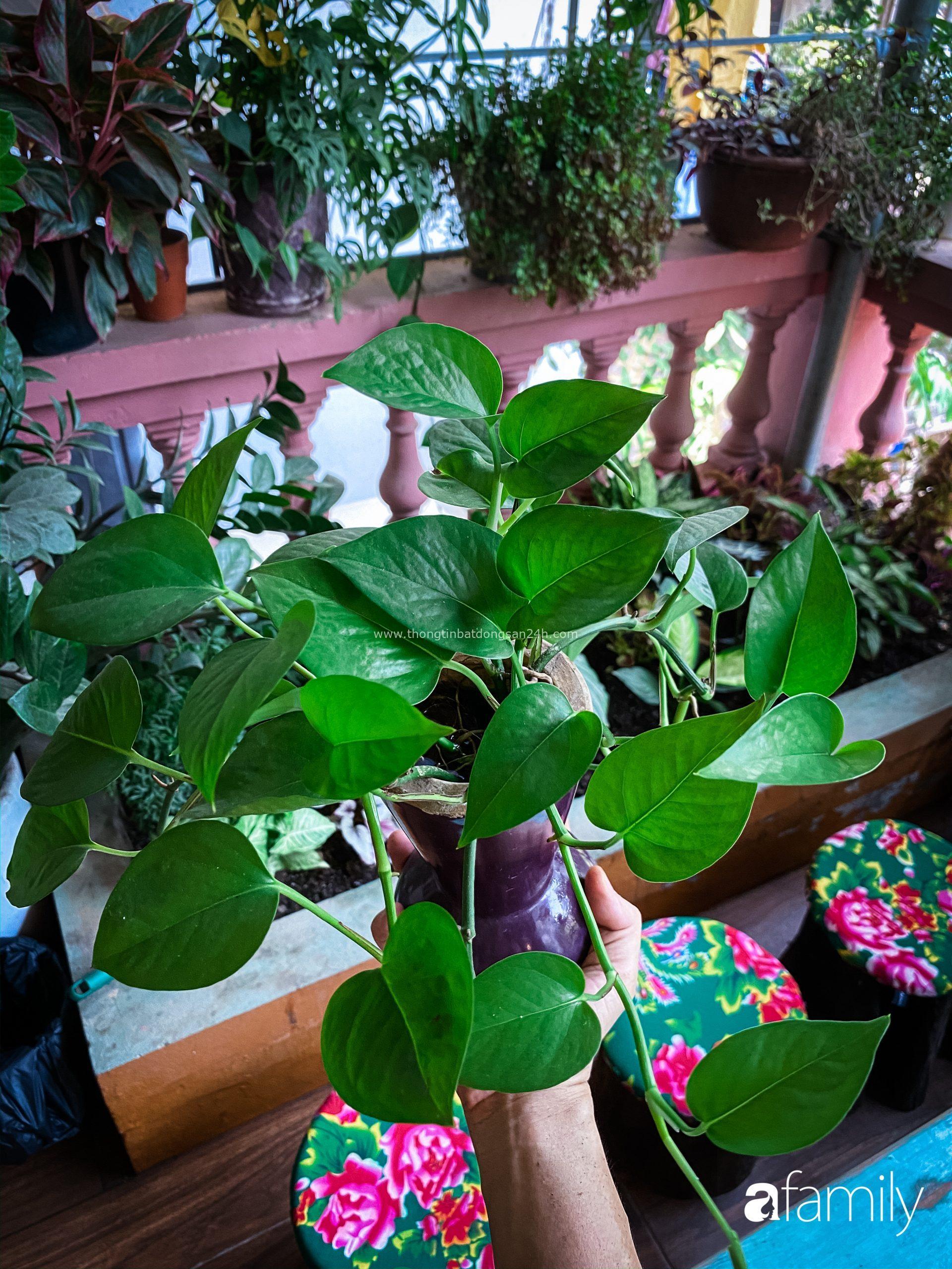 """Chàng trai Hà Nội chia sẻ bí quyết trồng cả """"rừng cây"""" tươi tốt xanh mát trong nhà 3"""