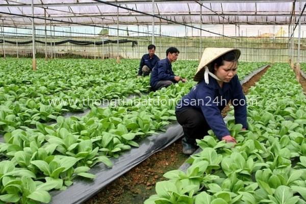 Hà Nội kêu gọi đầu tư vào 11 dự án nông nghiệp 13