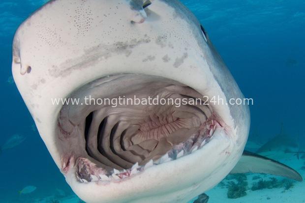 Vùng biển nhuốm máu: Chương sử kinh hoàng với người Hong Kong, nơi có nhiều người bị cá mập cắn chết bậc nhất hành tinh - Ảnh 5.
