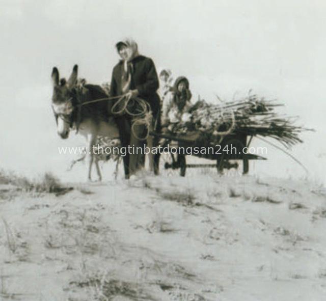 40 năm cặm cụi trồng rừng nơi cát sỏi, người phụ nữ biến hoang mạc thành thiên đường 10 vạn cây xanh - Ảnh 1.