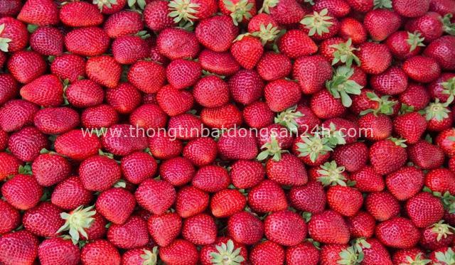 Bổ sung 10 loại trái cây, rau xanh này hàng ngày để vừa cấp nước, vừa tăng sức đề kháng trong mùa nắng nóng - Ảnh 2.