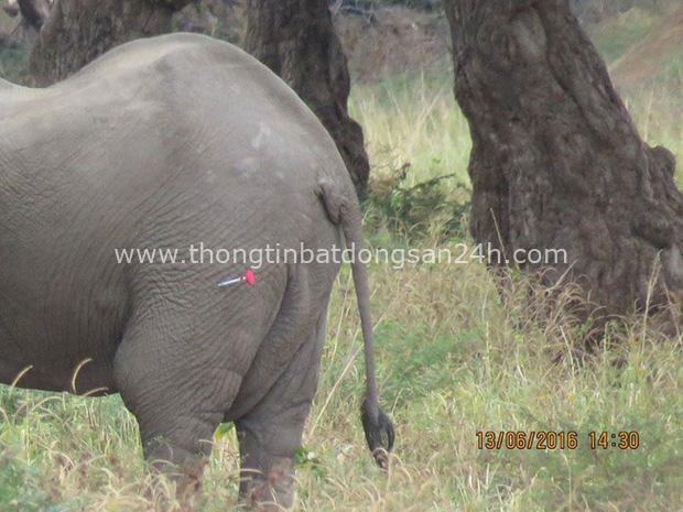 Kiểm tra lỗ thủng kỳ lạ trên đầu chú voi, bác sỹ thú y phát hiện sự thật đau buồn nhưng cũng bất ngờ vì cách hành xử của con vật - Ảnh 4.