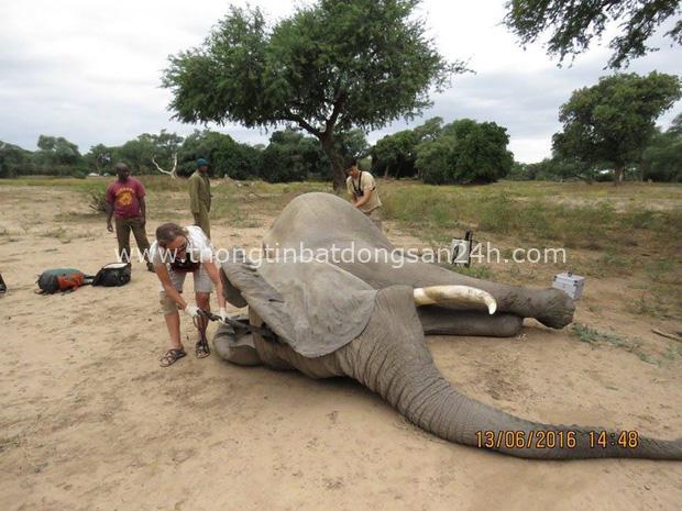 Kiểm tra lỗ thủng kỳ lạ trên đầu chú voi, bác sỹ thú y phát hiện sự thật đau buồn nhưng cũng bất ngờ vì cách hành xử của con vật - Ảnh 5.