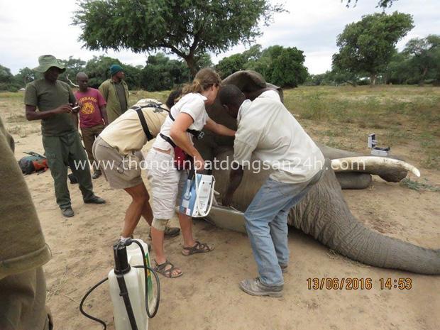 Kiểm tra lỗ thủng kỳ lạ trên đầu chú voi, bác sỹ thú y phát hiện sự thật đau buồn nhưng cũng bất ngờ vì cách hành xử của con vật - Ảnh 6.