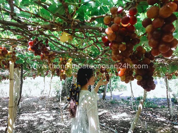 Lạc lối ở Ninh Thuận - vùng đất muốn núi có núi, muốn biển có biển, có cả sa mạc lộng gió nên thơ - Ảnh 5.