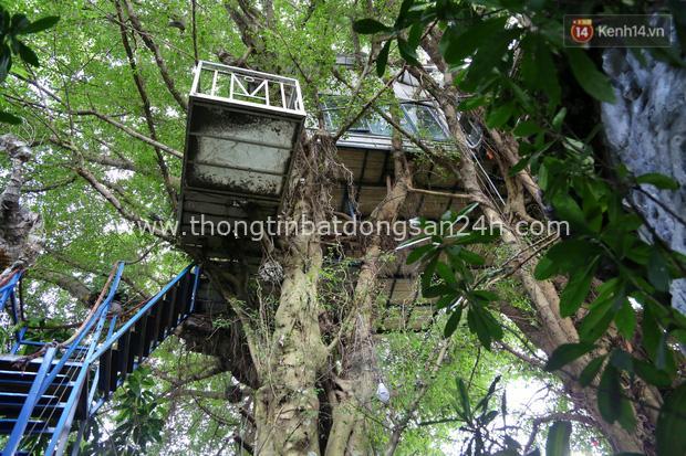 Ngay Hà Nội có một căn nhà cheo leo trên đỉnh ngọn cây của người họa sĩ 61 tuổi: Gần 20 năm trồng và đợi cây lớn - Ảnh 2.