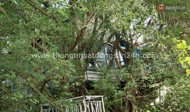 Ngay Hà Nội có một căn nhà cheo leo trên đỉnh ngọn cây của người họa sĩ 61 tuổi: Gần 20 năm trồng và đợi cây lớn - Ảnh 5.