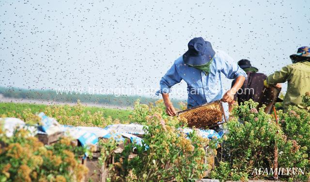 Tạm xa Hồ Tây một hôm, về Ninh Bình thăm bác nông dân thu nhập khủng nhờ nuôi ong lấy mật từ loài hoa ít ai ngờ tới - Ảnh 1.