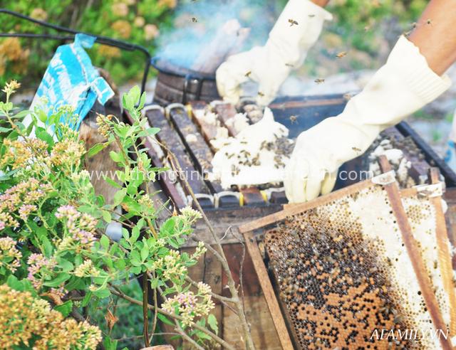 Tạm xa Hồ Tây một hôm, về Ninh Bình thăm bác nông dân thu nhập khủng nhờ nuôi ong lấy mật từ loài hoa ít ai ngờ tới - Ảnh 2.