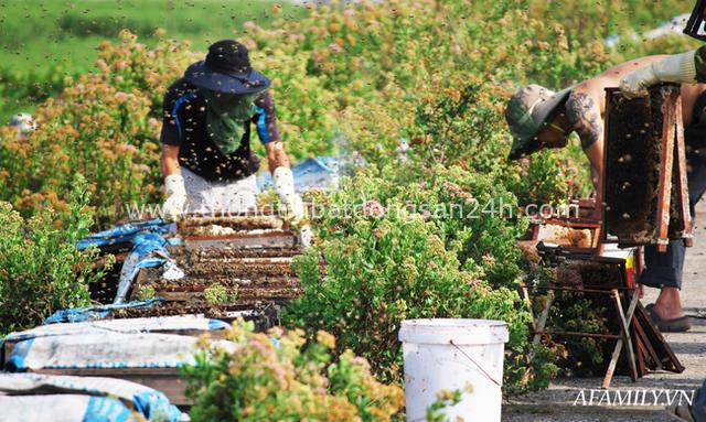 Tạm xa Hồ Tây một hôm, về Ninh Bình thăm bác nông dân thu nhập khủng nhờ nuôi ong lấy mật từ loài hoa ít ai ngờ tới - Ảnh 3.