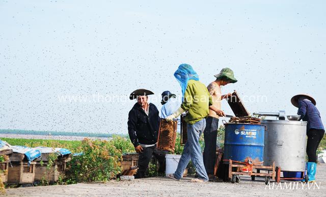 Tạm xa Hồ Tây một hôm, về Ninh Bình thăm bác nông dân thu nhập khủng nhờ nuôi ong lấy mật từ loài hoa ít ai ngờ tới - Ảnh 5.
