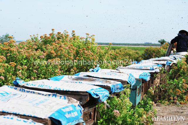 Tạm xa Hồ Tây một hôm, về Ninh Bình thăm bác nông dân thu nhập khủng nhờ nuôi ong lấy mật từ loài hoa ít ai ngờ tới - Ảnh 8.