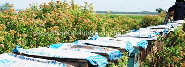 Tạm xa Hồ Tây một hôm, về Ninh Bình thăm bác nông dân thu nhập khủng nhờ nuôi ong lấy mật từ loài hoa ít ai ngờ tới - Ảnh 11.