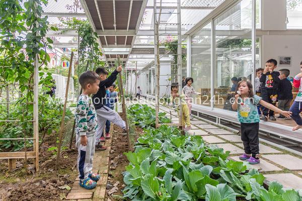 Vườn rau, cây leo bao quanh lớp học giữa Hạ Long, Quảng Ninh 10