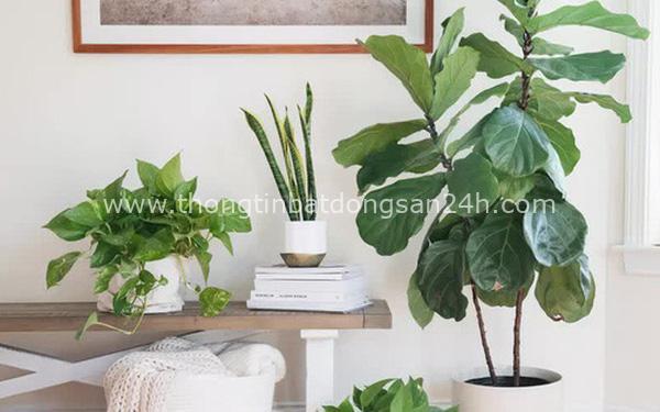 10 loại cây phong thủy tốt nhất cho phòng ngủ vì khả năng lọc không khí, giúp gia chủ phát tài lộc 5